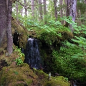 Tongass-National-Rain-Forest-2
