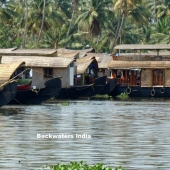 Backwaters_India-107