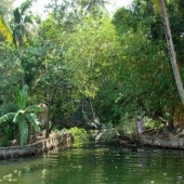 Backwaters_India-131
