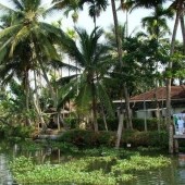 Backwaters_India-136