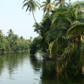Backwaters_India-142