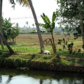 Backwaters_India-147
