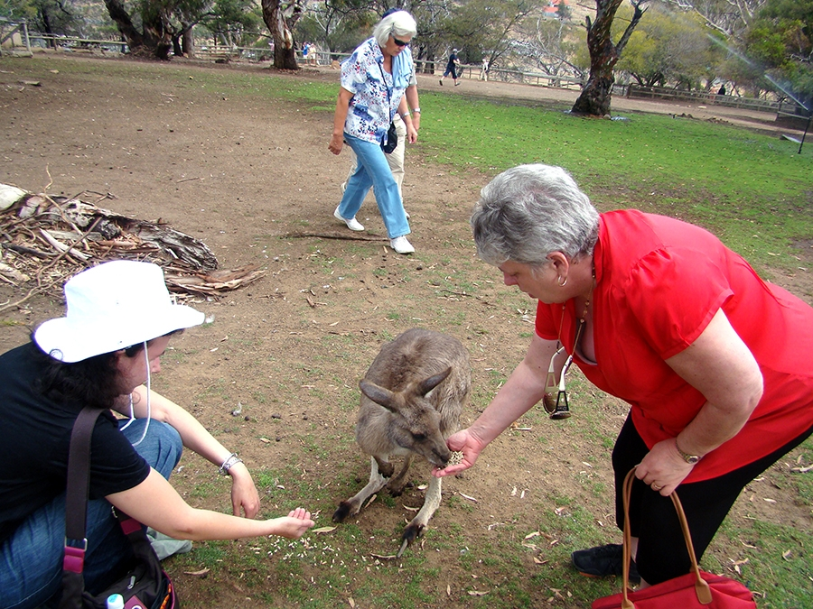 Travel with Sara Raney to see kangaroos in Australia