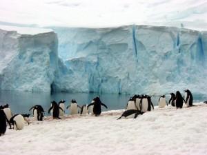 DSC01438 - penguins